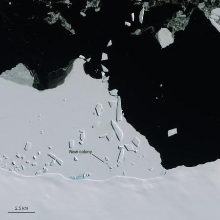 A penguin colony near Cape Gates