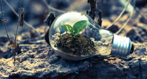 A lightbulb rests on dead soil. Inside the lightbulb is dirt from which a green plant is growing.