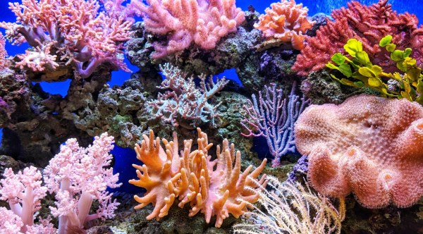 Image of underwater coral