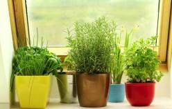 1-herbs-growing-on-window-min