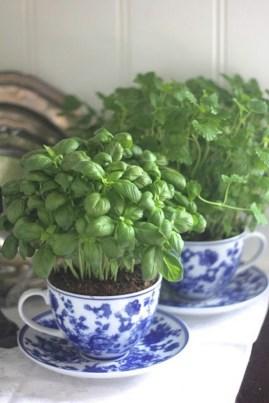 beautiful-tea-cup-indoor-plants-on-kitchen-table