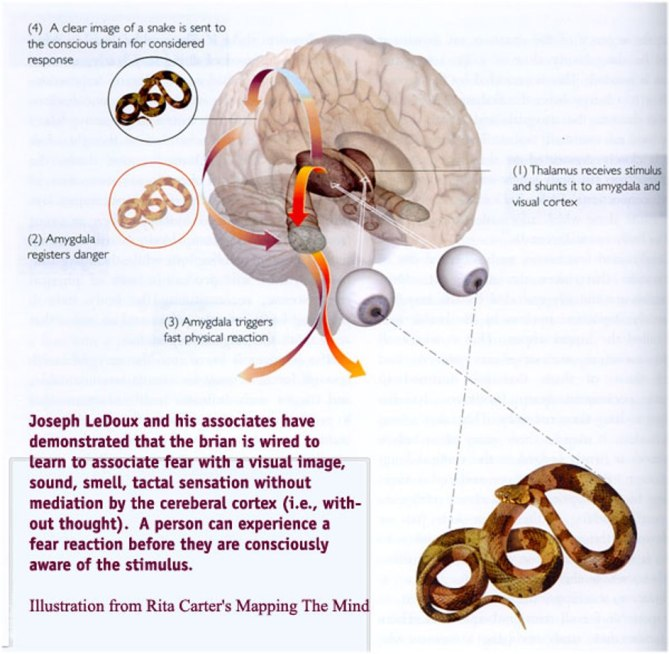 How a person can experience a fear reaction before being consciously aware of the stimulus. Your brain is wired to learn to associate fear with a visual image without thought. Cable and mainstream news is visual imagery and sound, which means they can and do program fear to predict and manipulate your behavior.