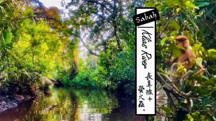 長鼻猴+螢火蟲克里亞斯紅樹林探險 Klias River—馬來西亞沙巴一日遊行程推薦