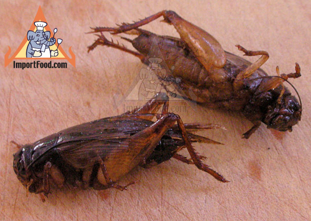 Thai Insects - Popular Snack Food in Thailand - Jing Leed
