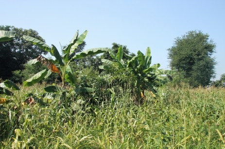 Ökologische Landwirtschaft - Projektfeld │ organic farming - project field