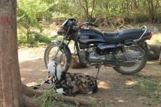 Ziegen und Motorrad │ goats and motorbike