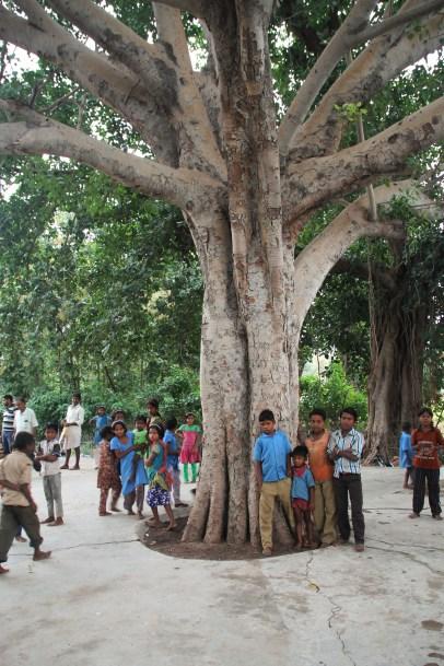 Versammlungsplatz unter einem alten Baum │ meeting place under an old tree