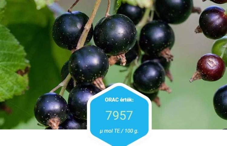 Feketeribizli erős antioxidáns véd ellen