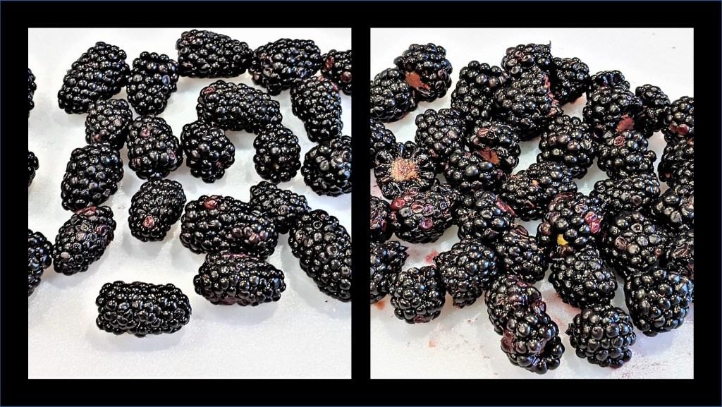 images of blackberries