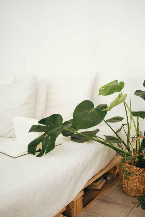 green leaf plant in brown pot inside room