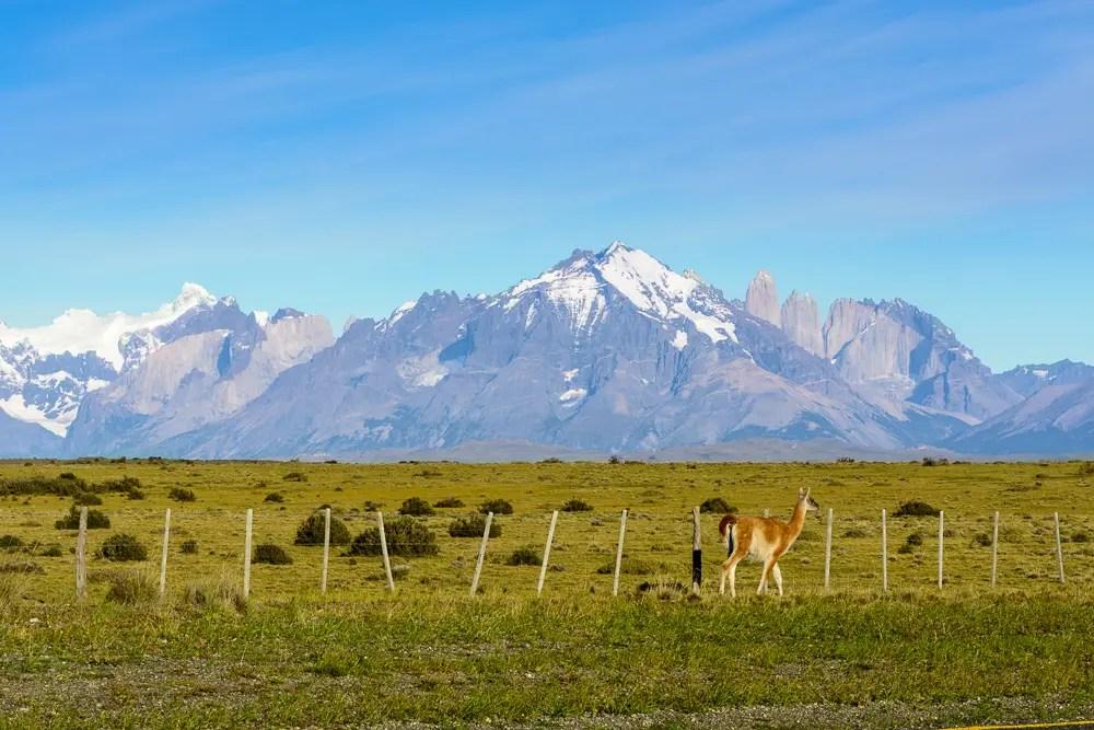 Patagonien W-Trekking im Torres del Paine Nationalpark