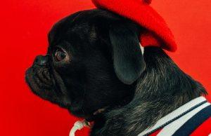 Che Lingua parlano i cani