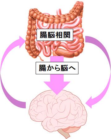 腸から脳への腸脳相関