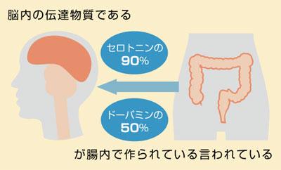 セロトニンの殆どは実は腸内で分泌される