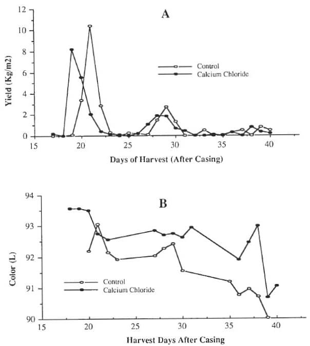 Figure 4: Influence of 0.3% calcium chloride added to irrigation water on (A) yield and (B) initial color (L value) of off-white hybrid mushrooms