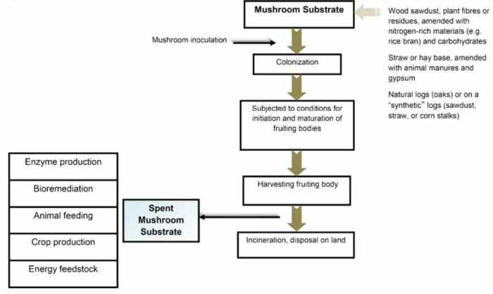 Figure 1: Mushroom production cycle form preparation of mushroom substrate to disposal