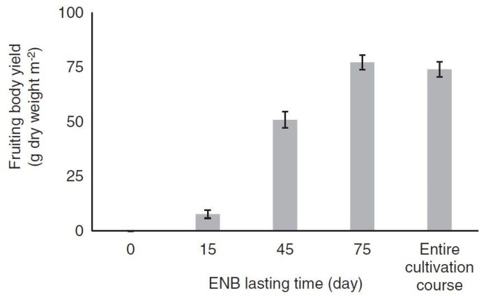 Figure 7: Development of the fruiting body yield during the cultivation period with ENB