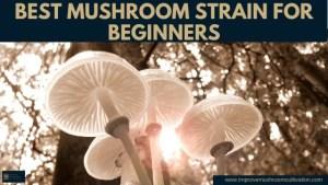 Best Mushroom Strain for Beginners