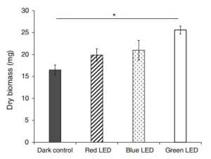 Dry biomass of Lentunila edodes mycelia grown under exposure to different LED light sources