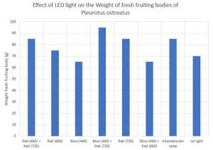 Effect of LED light on the weight of fresh fruiting bodies of Pleurotus ostreatus _yo2011