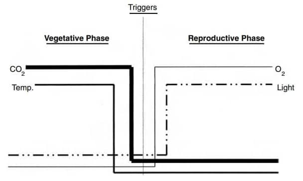 Two phases: vegetative and reproductive phase