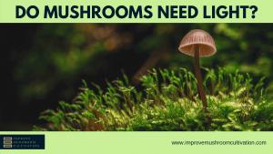 Do mushrooms need light