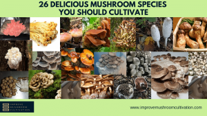 26 Delicious Mushrooms to Cultivate