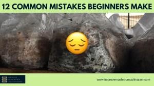 12 common mistakes beginner mushroom farmers make