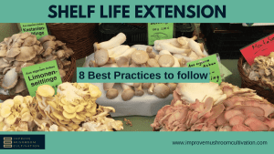 Mushroom Shelf Life: 8 Best Practices to Extend It!