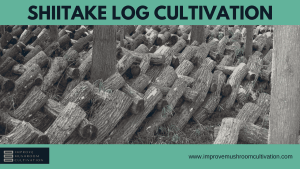 Shiitake Log Cultivation: Is it Worth?