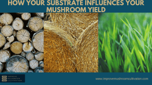 How Substrate Influences your Mushroom Yield