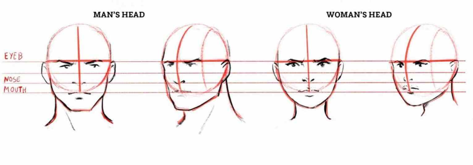 how to draw a face drawing the male and female head front and 3 4