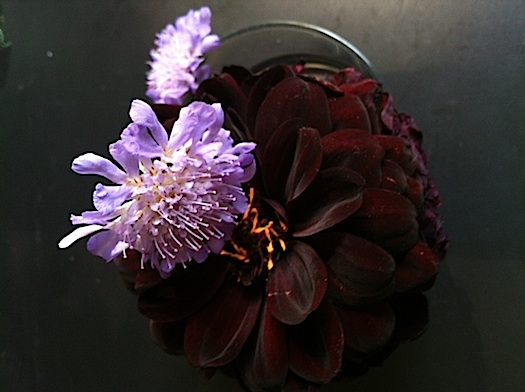 finding color inspiration in flowers