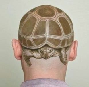 turtle hair cut