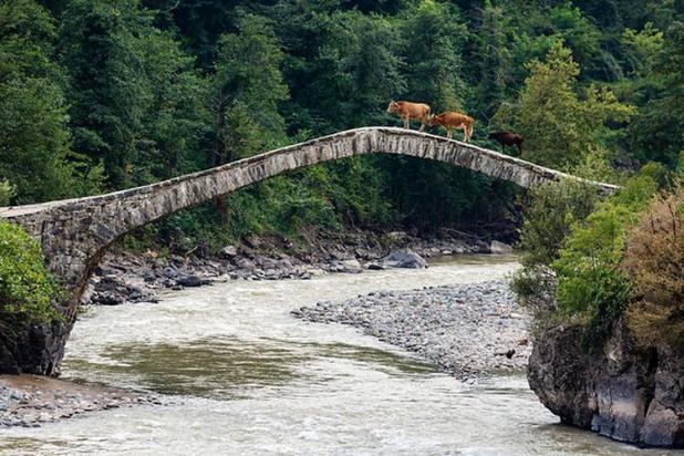 tamari most