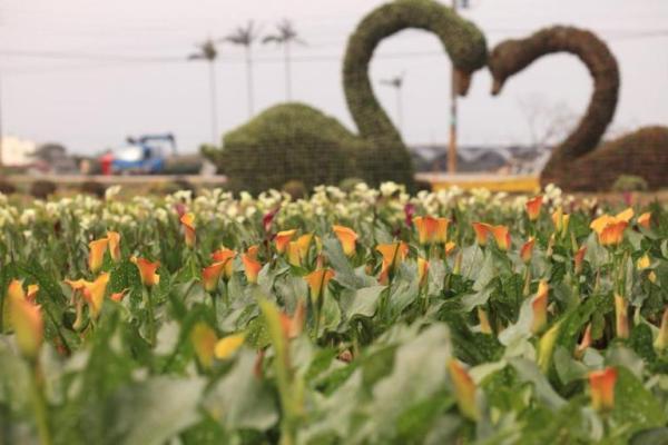 桃園彩色海芋季、3、4月活動