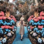 5月花季景點登場!全台12個繡球花景點大公開 打卡全攻略