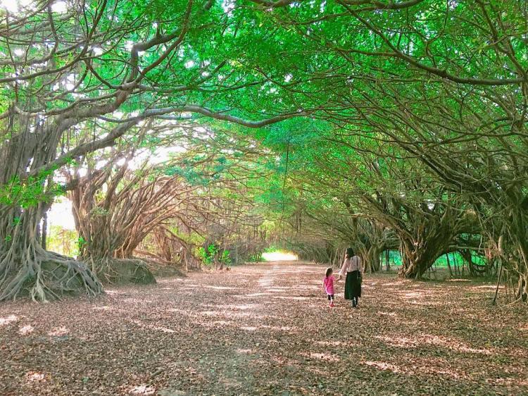 台南一日遊 台南必去景點推薦 新營長勝園區 綠色隧道