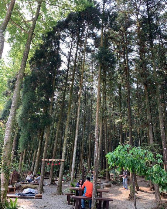 森窯 have a Picnic 新竹野餐秘境