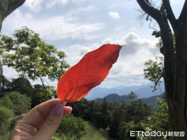 【南投】貓囒山紅葉步道健行 登氣象站眺望360度日月潭湖景