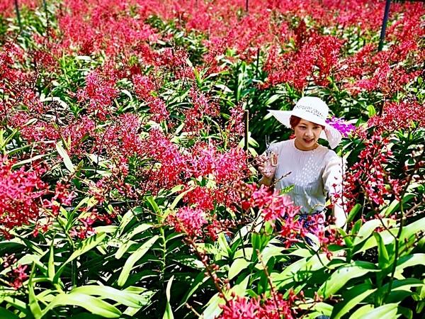 天使花園休閒農場