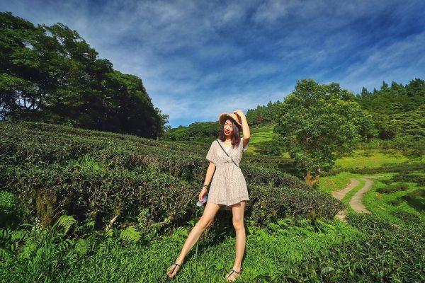 台灣農林熊空茶園,三峽景點,三峽