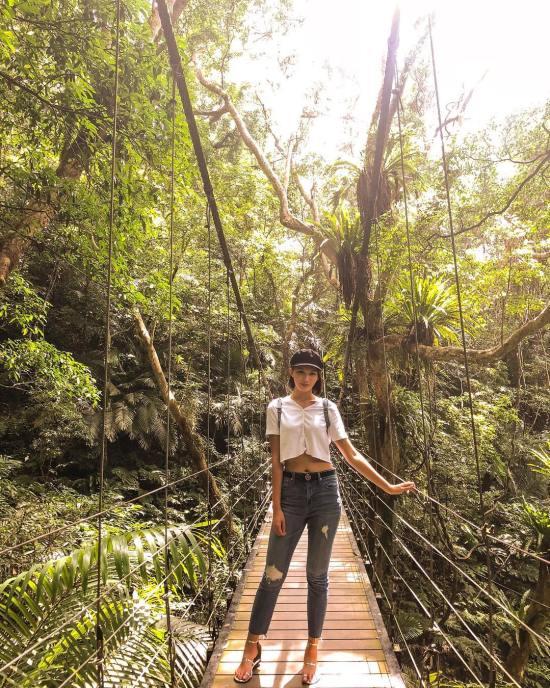 大板根亞熱帶雨林步行區,三峽景點,三峽