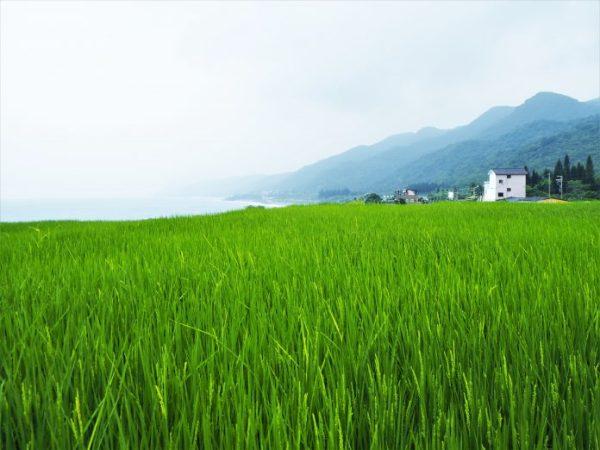 花蓮海線景點:新社梯田