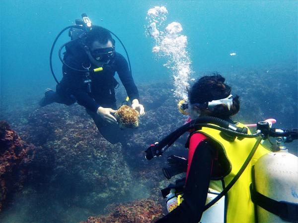 龍洞灣海洋公園潛水|龍洞活動|夏日水上活動|東北角