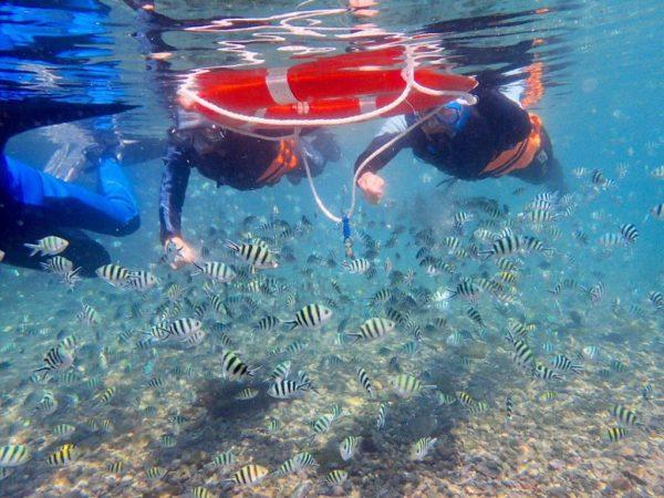 龍洞灣海洋公園浮潛|東北角|夏日活動|龍洞