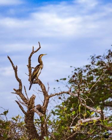 Kakadu National Park Yellow Water Cruise