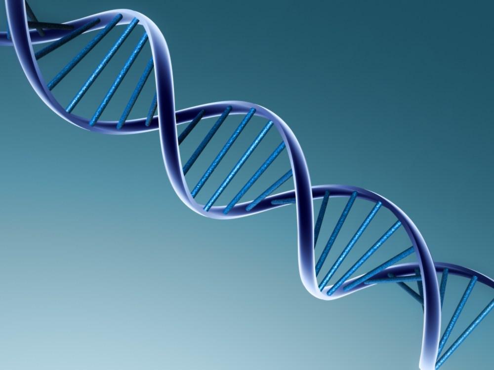 Genetics (1/2)