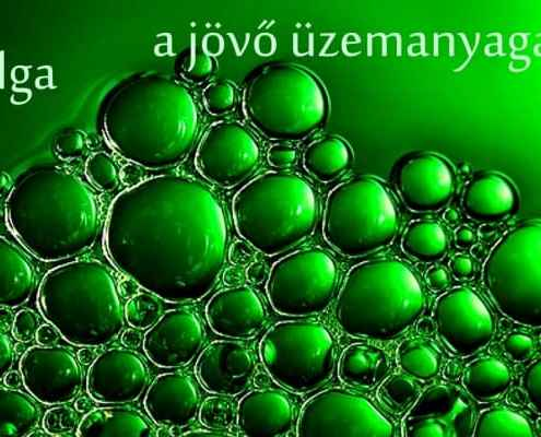 alga-a-jovo-taplaleka-imune.bio