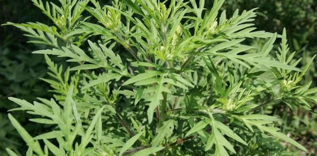 parlagfu-allergia-imune.bio